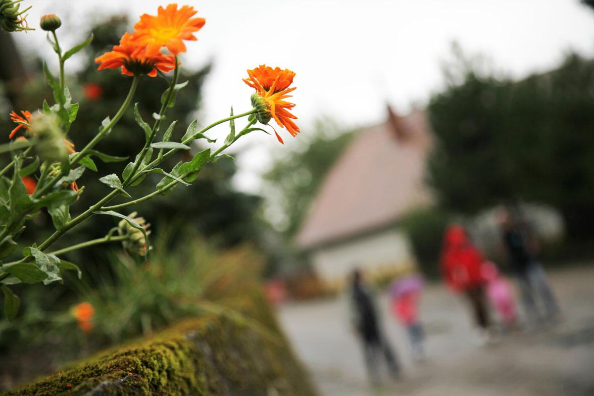 Campamento terapéutico para niños y adolescentes en Eslovaquia